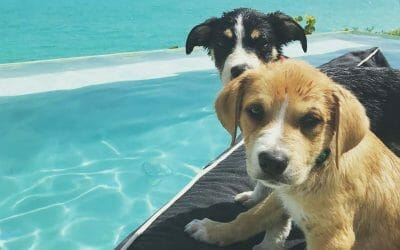 Cuddle with Puppies on this Tropical Beach