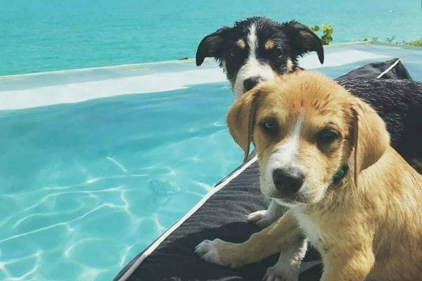 cuddle puppies turks and caicos