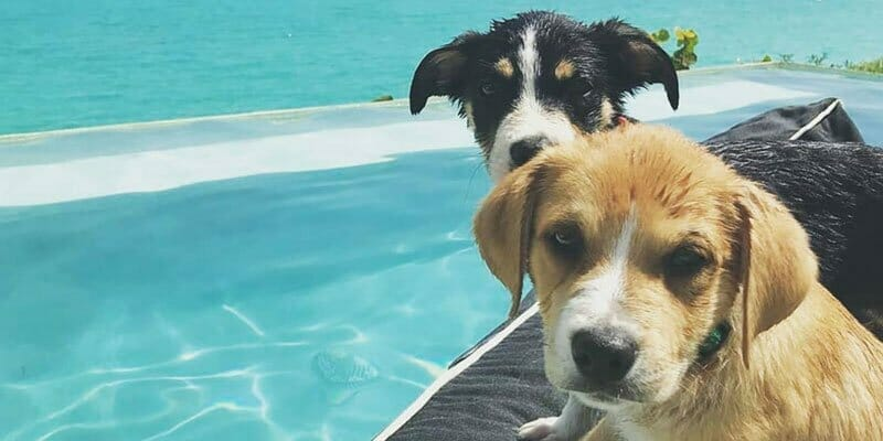 tropical puppies