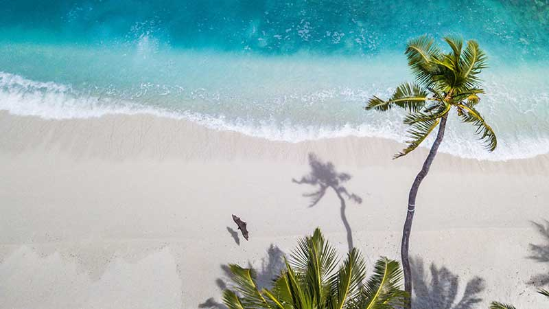 Why Do People Love Tropical Destinations? (Answered)