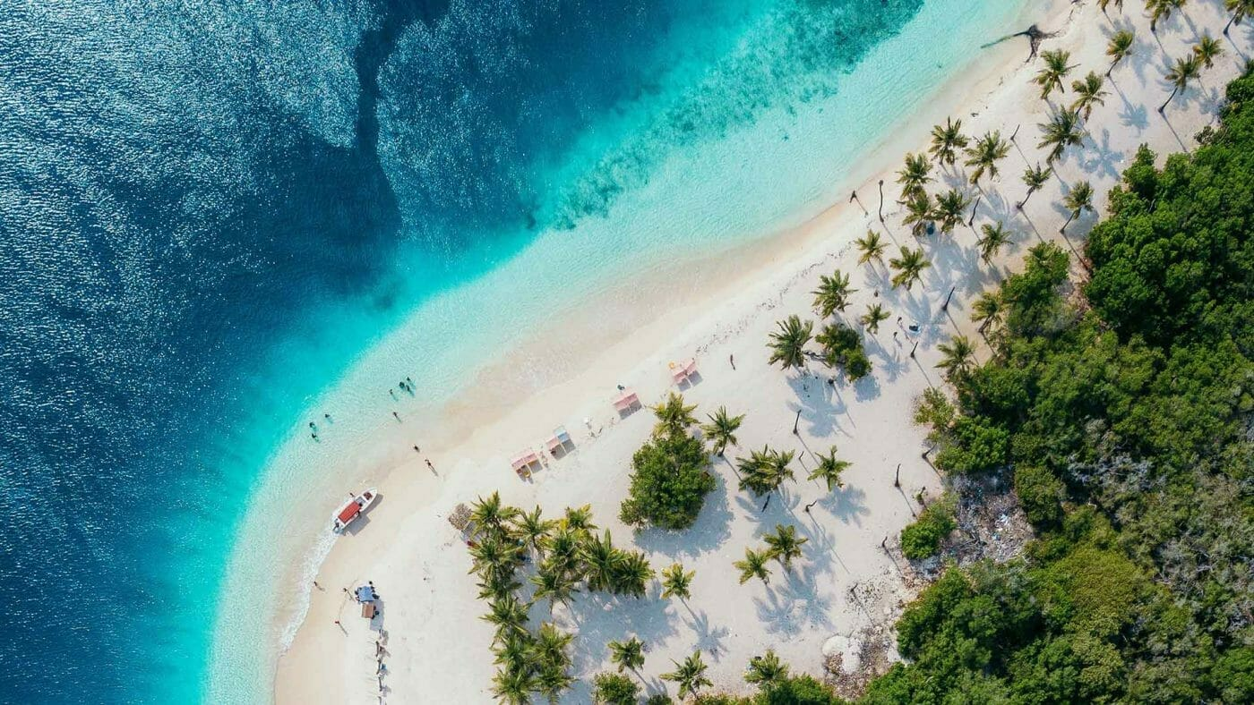 beach lined with palm trees wallpaper