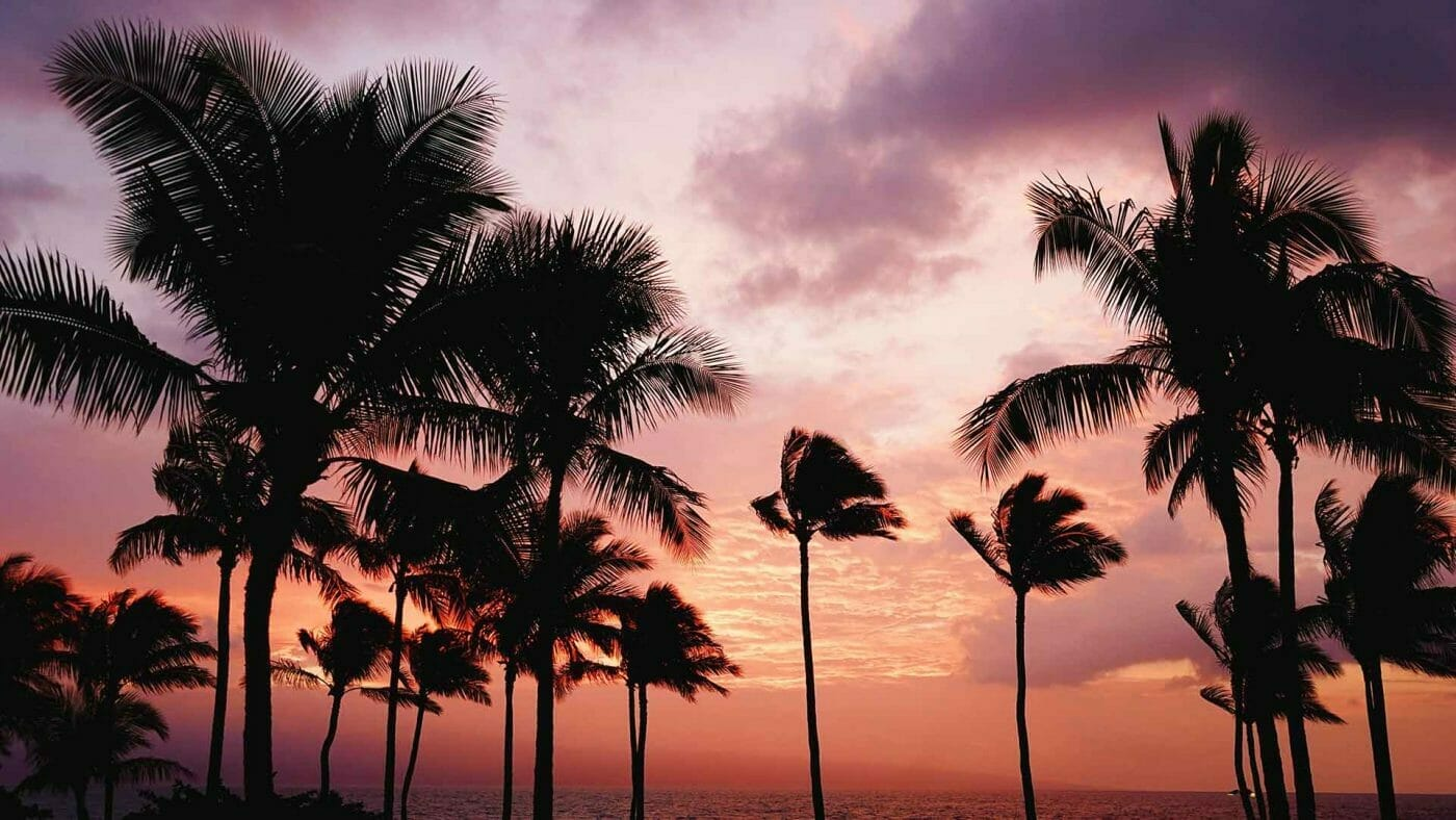 sunset palm trees silhouette wallpaper