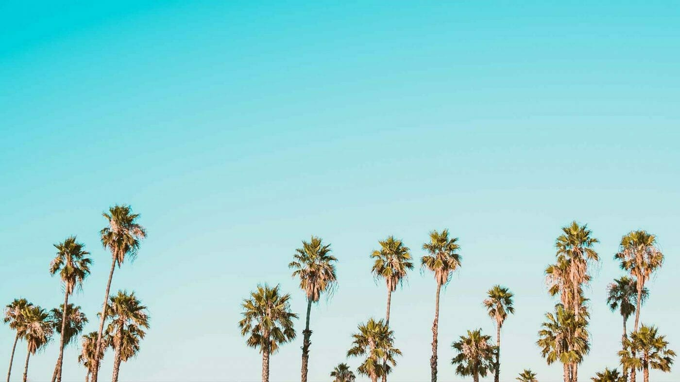 a bunch of palm trees wallpaper