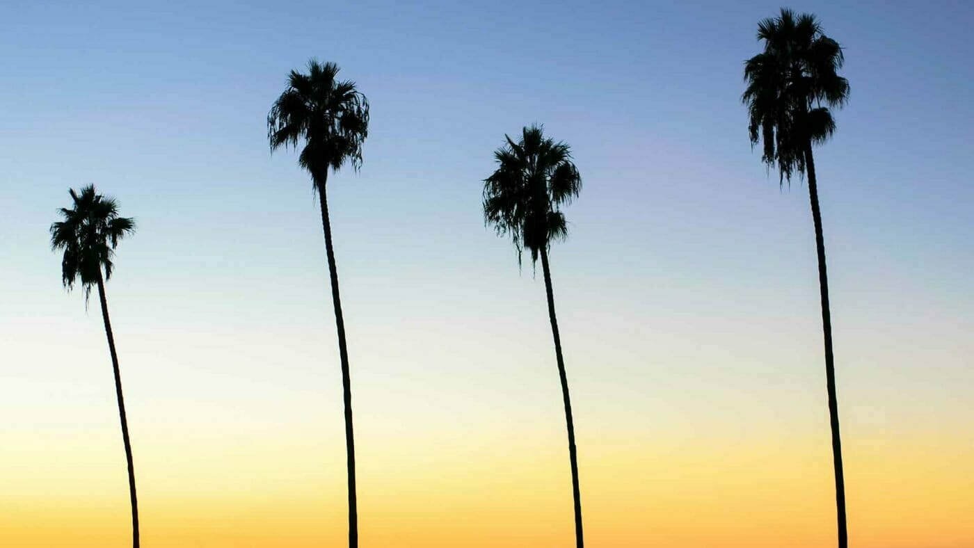 four palm trees silhouette wallpaper