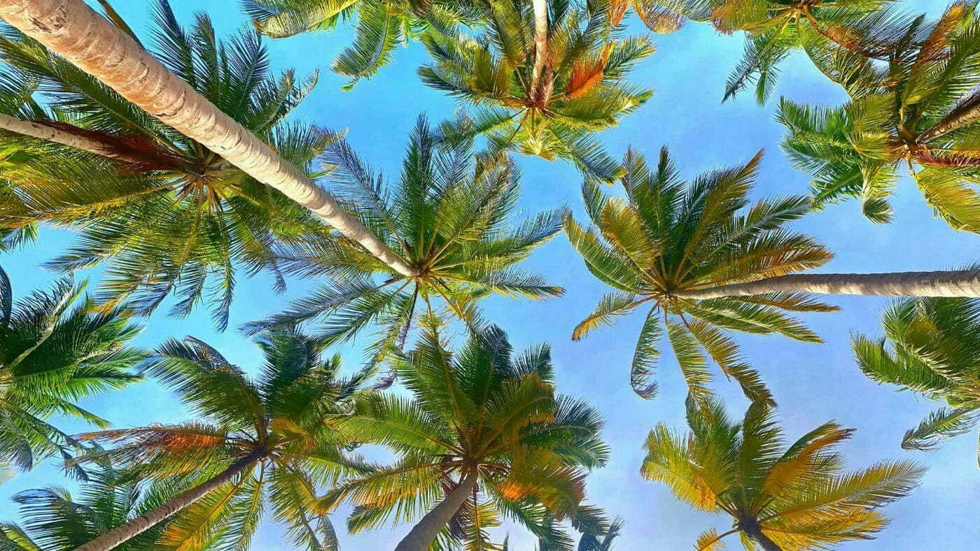 palm trees low angle wallpaper