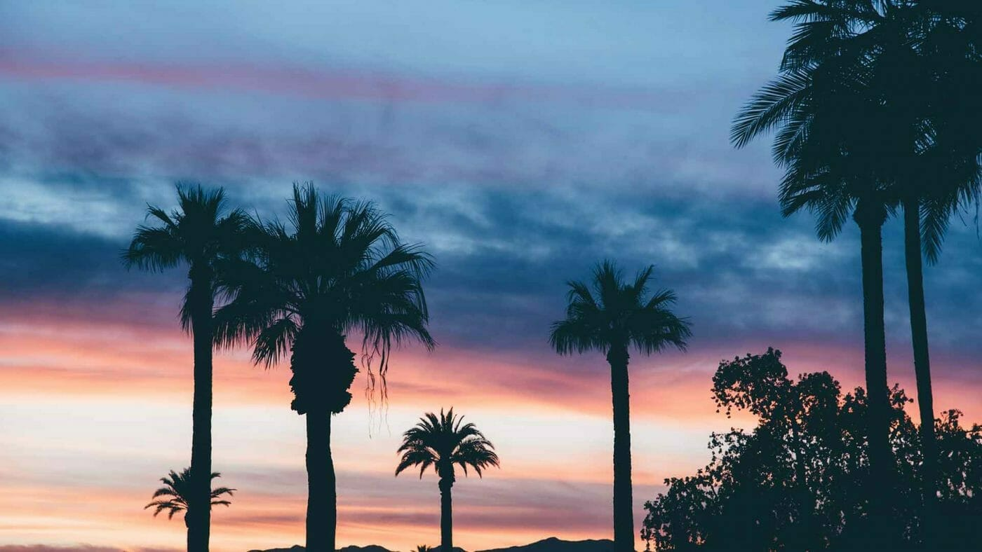 palm tree pink sunset silhouette wallpaper