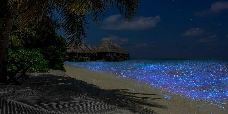 maldives glowing beach