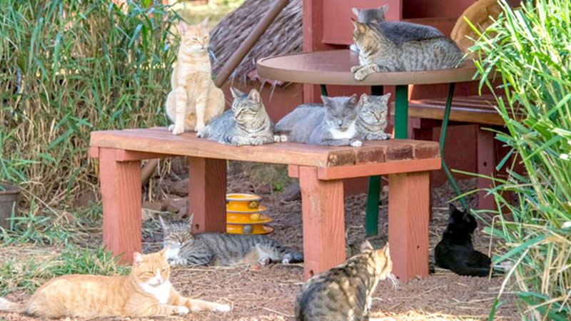 Cuddle With Over 600+ Cats At This Hawaiian Cat Sanctuary