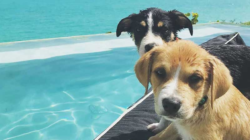 Cuddle Adorable Puppies On Your Caribbean Vacation